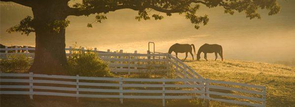 horses grazing on horse-barn-hill